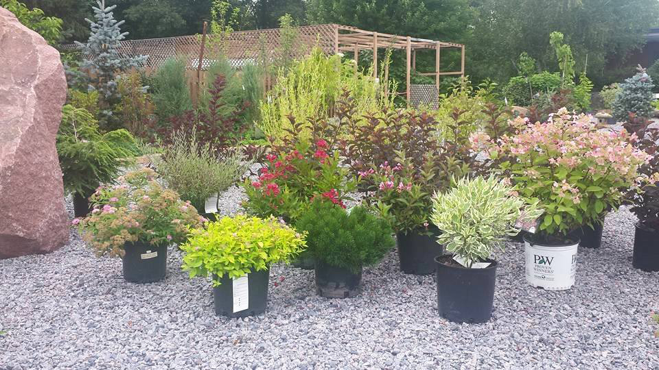 Landscaping Bushes For Wisconsin : Wolosek landscaping wisconsin rapids wi